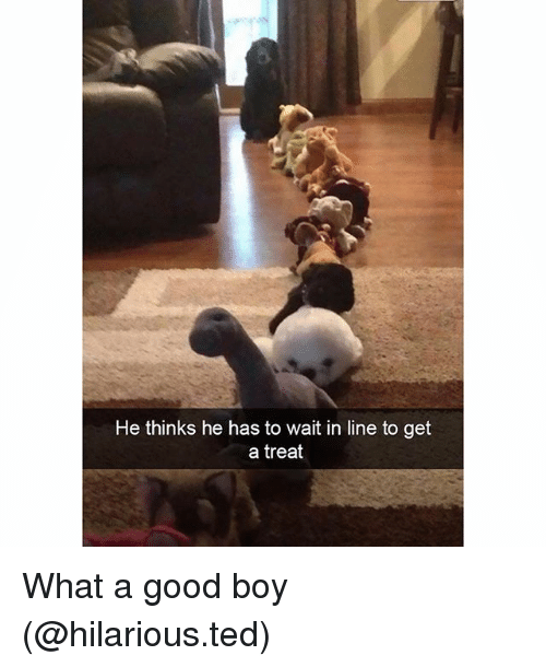 Funny, Ted, and Good: He thinks he has to wait in line to get  a treat What a good boy (@hilarious.ted)