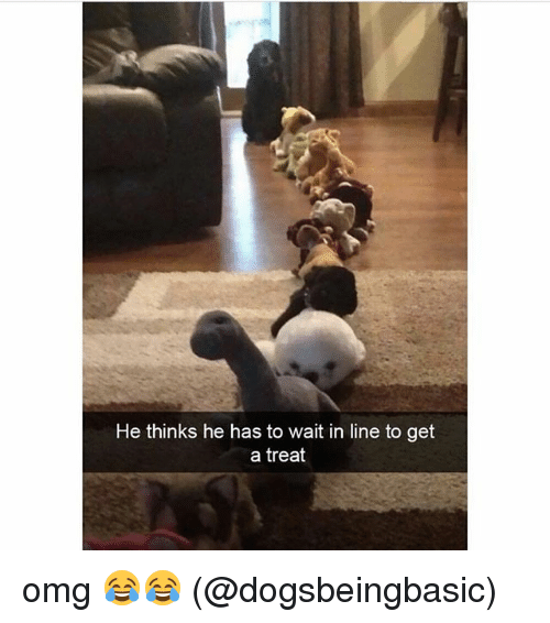 Memes, Omg, and 🤖: He thinks he has to wait in line to get  a treat omg 😂😂 (@dogsbeingbasic)