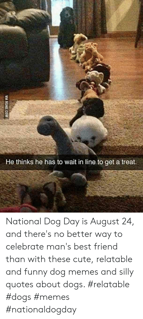 Silly Quotes: He thinks he has to wait in line to get a treat.  VIA 9GAG.COM National Dog Day is August 24, and there's no better way to celebrate man's best friend than with these cute, relatable and funny dog memes and silly quotes about dogs.  #relatable #dogs #memes #nationaldogday