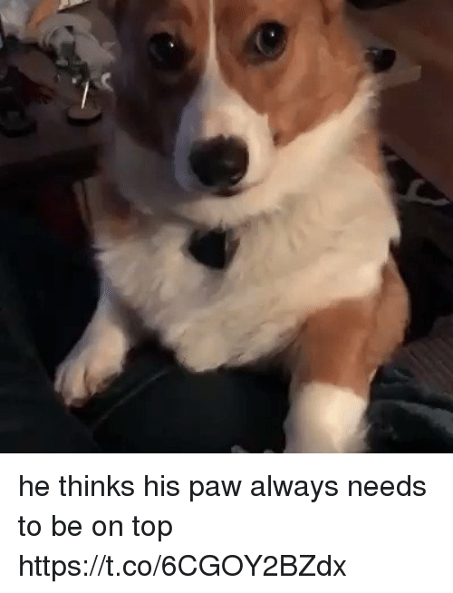 Pawing: he thinks his paw always needs to be on top https://t.co/6CGOY2BZdx