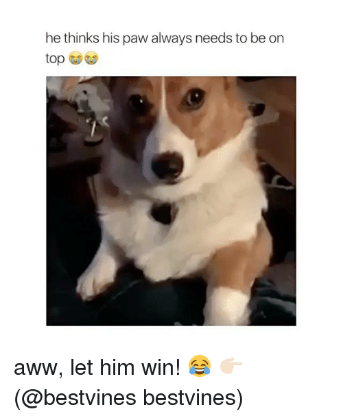 Aww, Memes, and 🤖: he thinks his paw always needs to be on  top aww, let him win! 😂 👉🏻(@bestvines bestvines)