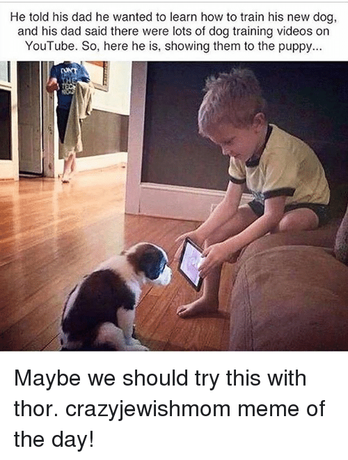 Dad, Meme, and Videos: He told his dad he wanted to learn how to train his new dog,  and his dad said there were lots of dog training videos on  YouTube. So, here he is, showing them to the puppy.. Maybe we should try this with thor. crazyjewishmom meme of the day!