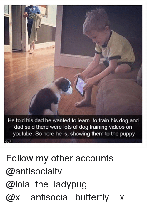 Ornings: He told his dad he wanted to learn to train his dog and  dad said there were lots of dog training videos orn  youtube. So here he is, showing them to the puppy Follow my other accounts @antisocialtv @lola_the_ladypug @x__antisocial_butterfly__x