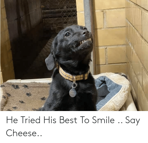 say cheese: He Tried His Best To Smile .. Say Cheese..