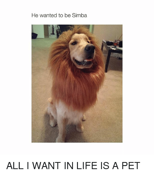 Life: He wanted to be Simba ALL I WANT IN LIFE IS A PET