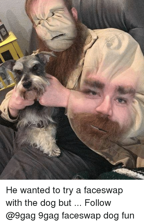 9gag, Memes, and 🤖: He wanted to try a faceswap with the dog but ... Follow @9gag 9gag faceswap dog fun