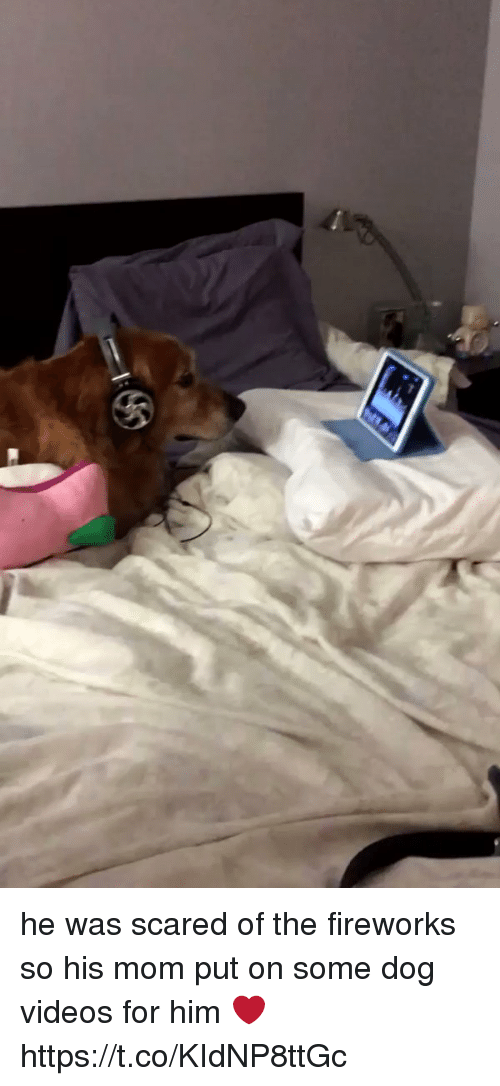 dog videos: he was scared of the fireworks so his mom put on some dog videos for him ❤️  https://t.co/KIdNP8ttGc