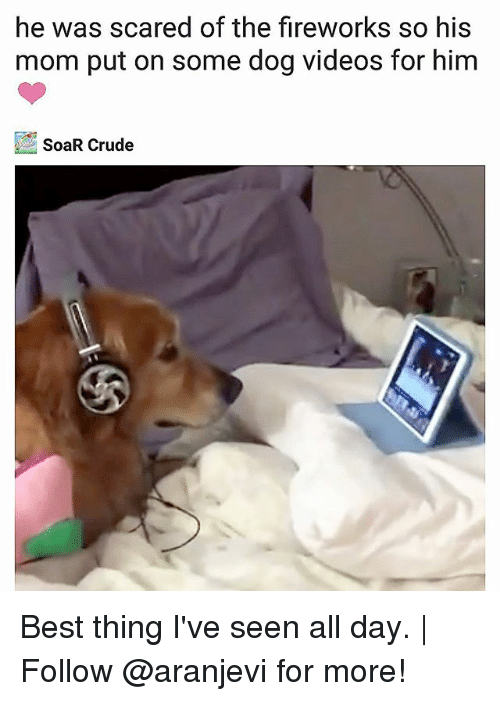 dog videos: he was scared of the fireworks so his  mom put on some dog videos for him  SoaR Crude Best thing I've seen all day. | Follow @aranjevi for more!