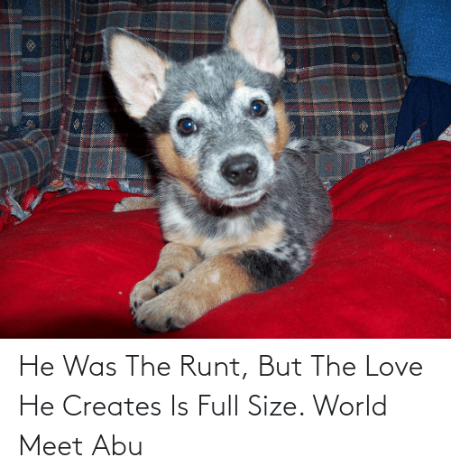 abu: He Was The Runt, But The Love He Creates Is Full Size. World Meet Abu