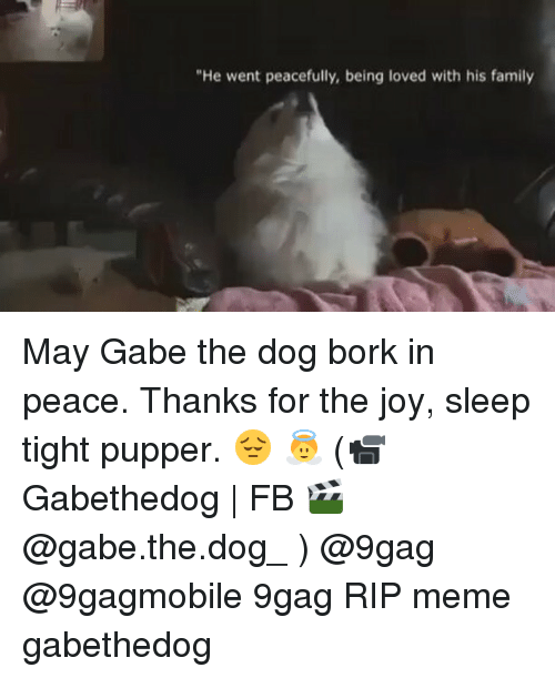 "Gabe: ""He went peacefully, being loved with his family May Gabe the dog bork in peace. Thanks for the joy, sleep tight pupper. 😔 👼 (📹 Gabethedog 