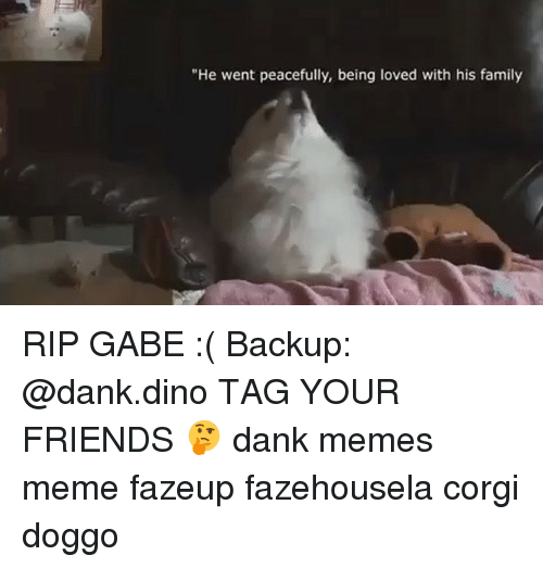 "Gabe: ""He went peacefully, being loved with his family RIP GABE :( Backup: @dank.dino TAG YOUR FRIENDS 🤔 dank memes meme fazeup fazehousela corgi doggo"