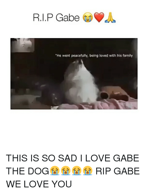 "Gabe: ""He went peacefully, being loved with his family THIS IS SO SAD I LOVE GABE THE DOG😭😭😭😭 RIP GABE WE LOVE YOU"