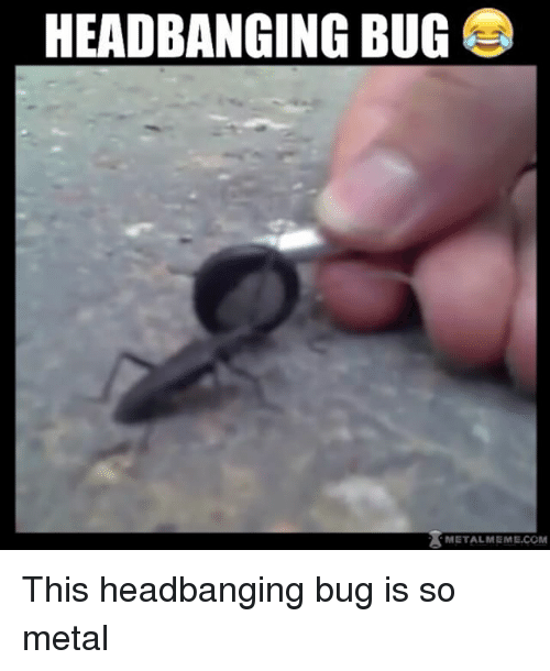 Headbanging: HEADBANGING BUG  METALMEME.COM This headbanging bug is so metal