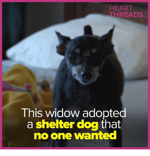 threads: HEART  THREADS  This widow adopted  a shelter dog that  no one wanted