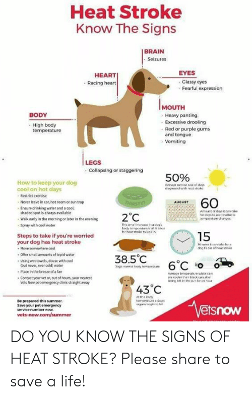 Cars, Dogs, and Drinking: Heat Stroke  Know The Signs  I BRAIN  Seizures  EYES  HEART  Racing heart  Classy eyes  Fearful expression  IMOUTH  Heavy panting.  Excessive drooling  Red or purple gums  and tongue  Vomiting  BODY  High body  temperature  LEGS  .Collapsing or staggering  50%  How to keep your dog  cool on hot days  Aae surv of dugs  dingned with ke  Restrict exercise  60  Never leave in car, hot room or sun trap  AUGUST  THIRSTY?  Ensure drinking water and a cool,  shaded spot is aways available  Amaunt of days ecen ake  for doas to acc matse to  pueches  2°C  Walk early in the morning or later in the evening  This s ne n a duy  bedy empontn is al a s  for heat stoke tos kki  Spray with cool water  15  Steps to take if you're worried  your dog has heat stroke  Move somewhere cool  Offer small amounts of tepid water  Muscan ak for  dee to ee of het srke  38.5°C  Using wet towels, douse with cool  (but never, ever cold) water  6°C o  Ong  nomal boy tmpertu  Place in the breeze of a fan  Aesce tempeahe whe can  are cooler ha black cars ale  ing ef in the sunfor an hour  .Contact your vet or, out of hours, your nearest  Vets Now pet emergency clinic straight away  43°C  At th bedy  tem e dogs  rs ogin ta la  Vetsnow  Be prepared this summer  Save your pot emergency  service number now  vets-now.com/summer DO YOU KNOW THE SIGNS OF HEAT STROKE? Please share to save a life!