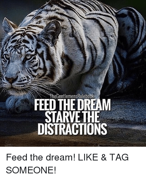 Memes, Tag Someone, and 🤖: heGentlemens Rulebook  FEED THE DREAM  STARVE THE  DISTRACTIONS Feed the dream! LIKE & TAG SOMEONE!