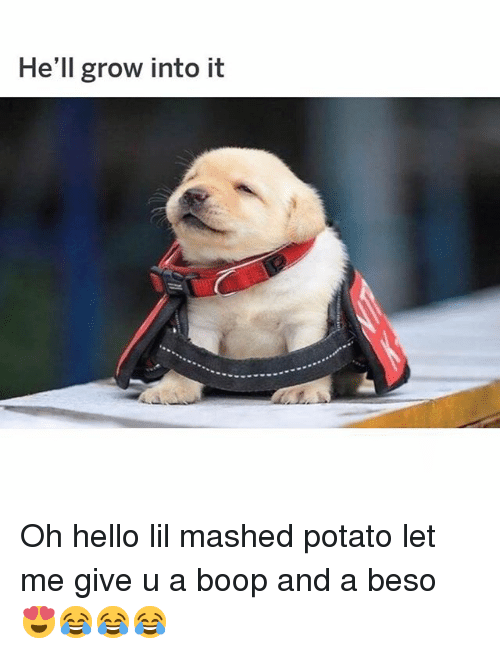 Hello, Memes, and Potato: He'll grow into it Oh hello lil mashed potato let me give u a boop and a beso 😍😂😂😂