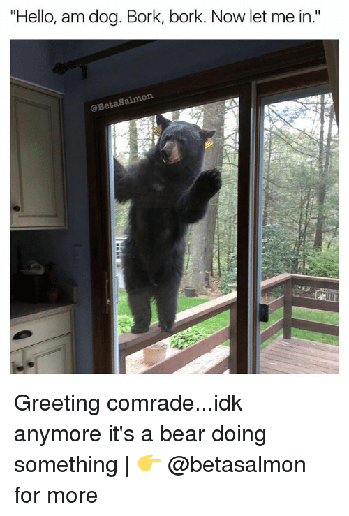 "Hello, Memes, and Bear: ""Hello, am dog. Bork, bork. Now let me in.""  @BetaSalmon Greeting comrade...idk anymore it's a bear doing something 