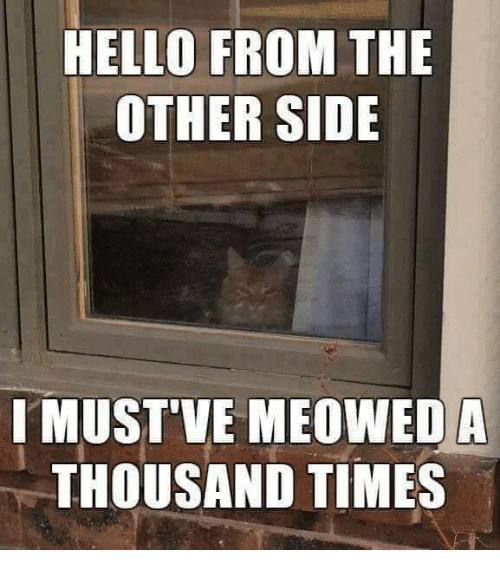 Funny, Hello, and Time: HELLO FROM THE  OTHER SIDE  I MUST VE MEOWED A  THOUSAND TIMES