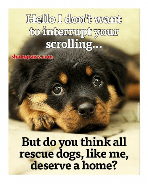 Interruption: Hello I don't want  to  interrupt your  scrolling..  sh  But do you think all  rescue dogs, like me,  deserve a home?