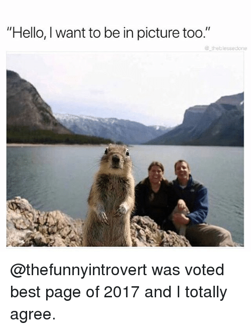 "Funny, Hello, and Meme: ""Hello, I want to be in picture too.""  @ theblessedone @thefunnyintrovert was voted best page of 2017 and I totally agree."