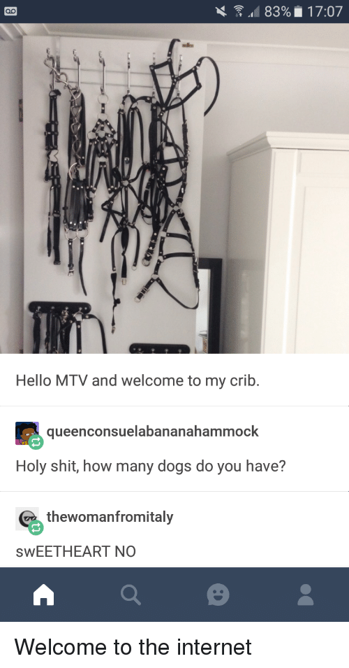 Welcome To My Crib: Hello MTV and welcome to my crib.  queenconsuelabananahammock  Holy shit, how many dogs do you have?  thewomanfromitaly  SwEETHEART NO