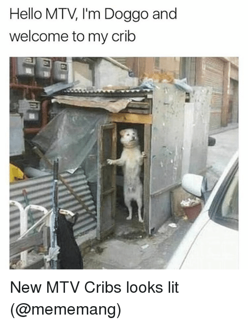 Memes, Mtv, and 🤖: Hello MTV I'm Doggo and  welcome to my crib New MTV Cribs looks lit (@mememang)