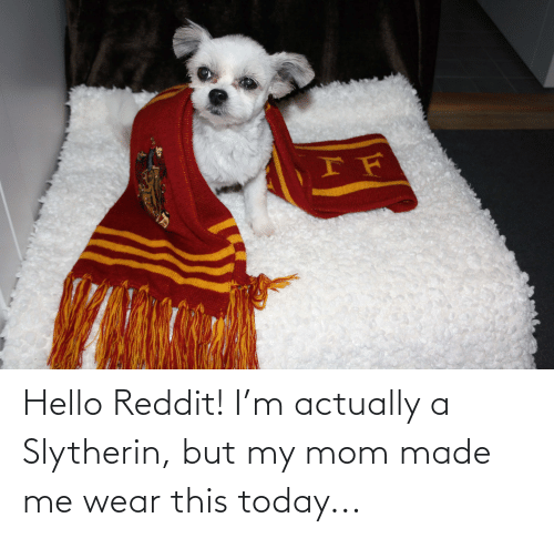 Slytherin: Hello Reddit! I'm actually a Slytherin, but my mom made me wear this today...