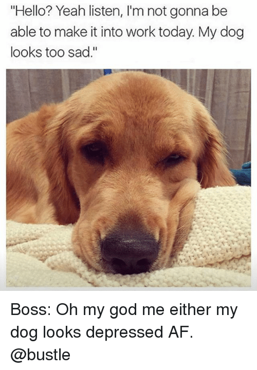 """Af, God, and Hello: """"Hello? Yeah listen, I'm not gonna be  able to make it into work today. My dog  looks too sad."""" Boss: Oh my god me either my dog looks depressed AF. @bustle"""