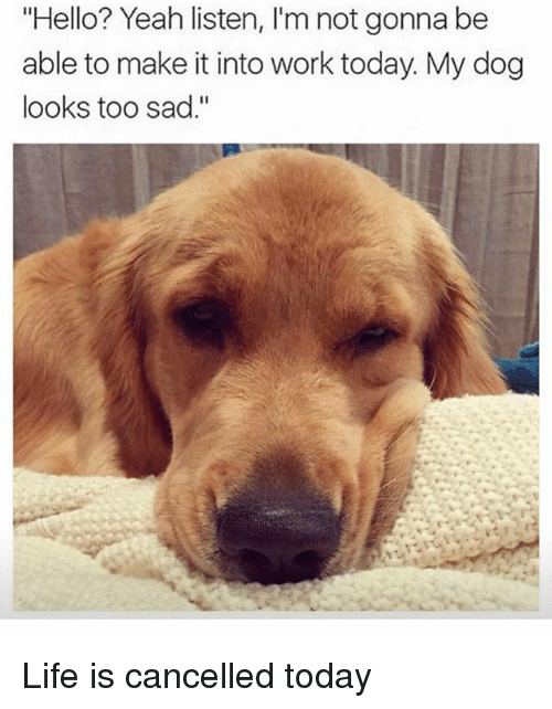 """Hello, Life, and Yeah: Hello? Yeah listen, I'm not gonna be  able to make it into work today. My dog  looks too sad."""" Life is cancelled today"""