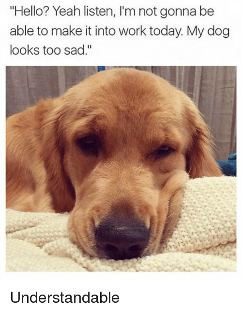 """Dank, Hello, and Yeah: """"Hello? Yeah listen, I'm not gonna be  able to make it into work today. My dog  looks too sad."""" Understandable"""