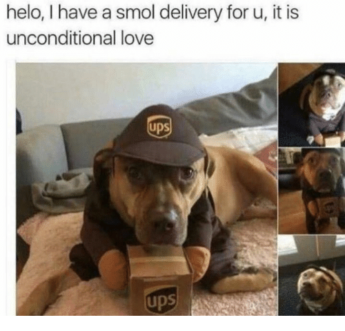 Love, Ups, and Unconditional Love: helo, have a smol delivery foru, it is  unconditional love  Ups