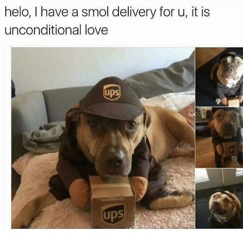 Love, Ups, and For: helo, I have a smol delivery for u, it is  unconditional love  upS