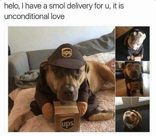 helo: helo, I have a smol delivery for u, it is  unconditional love  upS  upS