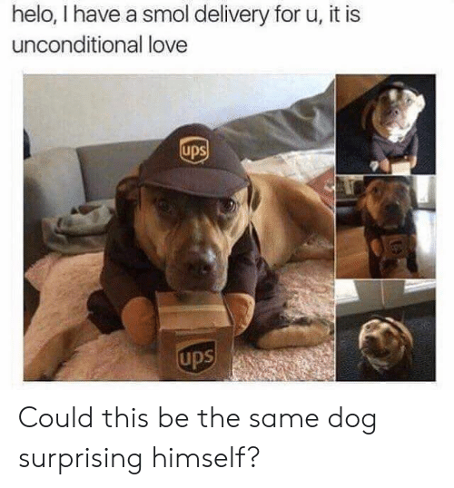 helo: helo, I have a smol delivery for u, it is  unconditional love  ups  ups Could this be the same dog surprising himself?