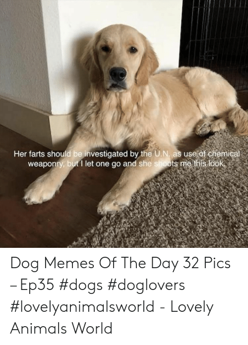 farts: Her farts should be investigated by the U.N, as use of chemic  weaponry, but1 let one go and she shoots me this look Dog Memes Of The Day 32 Pics – Ep35 #dogs #doglovers #lovelyanimalsworld - Lovely Animals World