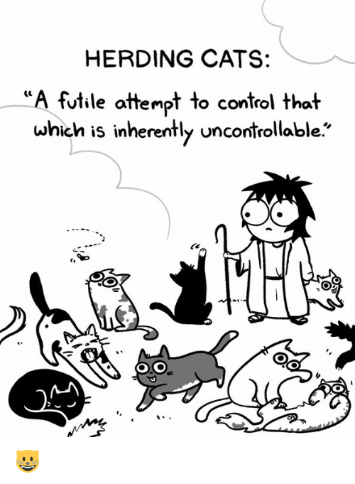 herding: HERDING CATS:  futile attempt to control that  which is inherently uncontrollable. 😺