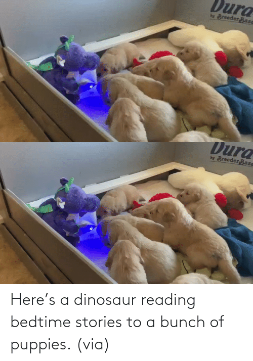 A Bunch Of: Here's a dinosaur reading bedtime stories to a bunch of puppies. (via)
