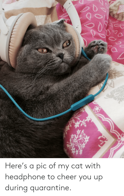 You Up: Here's a pic of my cat with headphone to cheer you up during quarantine.