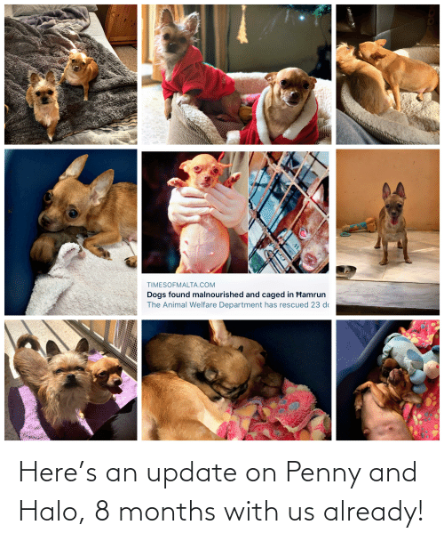 Halo: Here's an update on Penny and Halo, 8 months with us already!