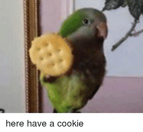 Cookie, Have-A-Cookie, and Here: here  have a cookie