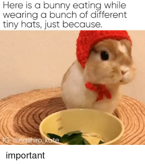 Relatable, Tiny, and Bunny: Here is a bunny eating while  wearing a bunch of different  tiny hats, just because.  IG nashiro important