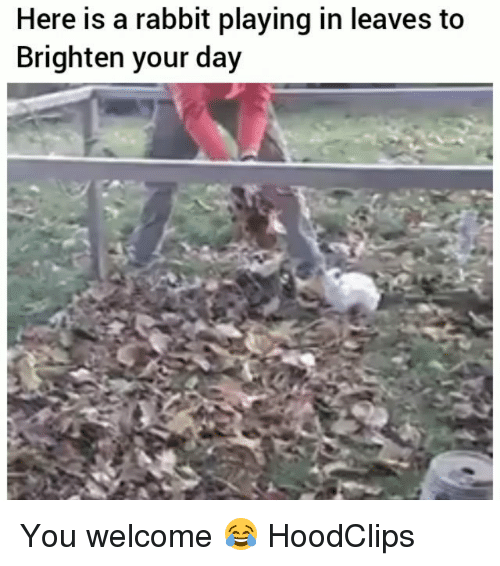 You Welcome: Here is a rabbit playing in leaves to  Brighten your day You welcome 😂 HoodClips