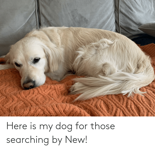 Searching: Here is my dog for those searching by New!