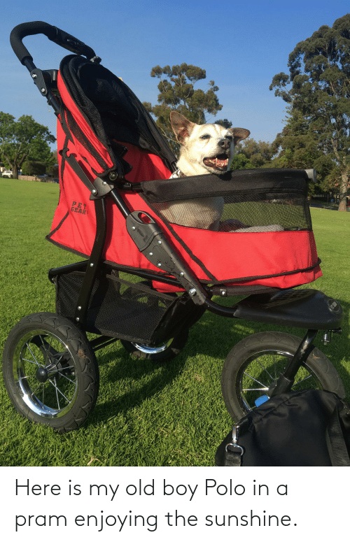 Polo: Here is my old boy Polo in a pram enjoying the sunshine.
