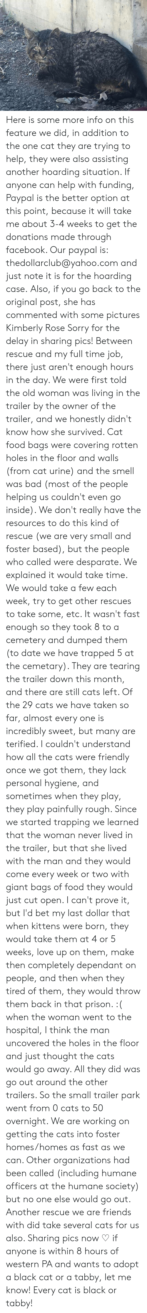 cat urine: Here is some more info on this feature we did, in addition to the one cat they are trying to help, they were also assisting another hoarding situation.  If anyone can help with funding, Paypal is the better option at this point, because it will take me about 3-4 weeks to get the donations made through facebook.  Our paypal is: thedollarclub@yahoo.com and just note it is for the hoarding case.  Also, if you go back to the original post, she has commented with some pictures  Kimberly Rose Sorry for the delay in sharing pics! Between rescue and my full time job, there just aren't enough hours in the day. We were first told the old woman was living in the trailer by the owner of the trailer, and we honestly didn't know how she survived. Cat food bags were covering rotten holes in the floor and walls (from cat urine) and the smell was bad (most of the people helping us couldn't even go inside). We don't really have the resources to do this kind of rescue (we are very small and foster based), but the people who called were desparate. We explained it would take time. We would take a few each week, try to get other rescues to take some, etc. It wasn't fast enough so they took 8 to a cemetery and dumped them (to date we have trapped 5 at the cemetary). They are tearing the trailer down this month, and there are still cats left. Of the 29 cats we have taken so far, almost every one is incredibly sweet, but many are terified. I couldn't understand how all the cats were friendly once we got them, they lack personal hygiene, and sometimes when they play, they play painfully rough. Since we started trapping we learned that the woman never lived in the trailer, but that she lived with the man and they would come every week or two with giant bags of food they would just cut open. I can't prove it, but I'd bet my last dollar that when kittens were born, they would take them at 4 or 5 weeks, love up on them, make then completely dependant on people, and then when they tire