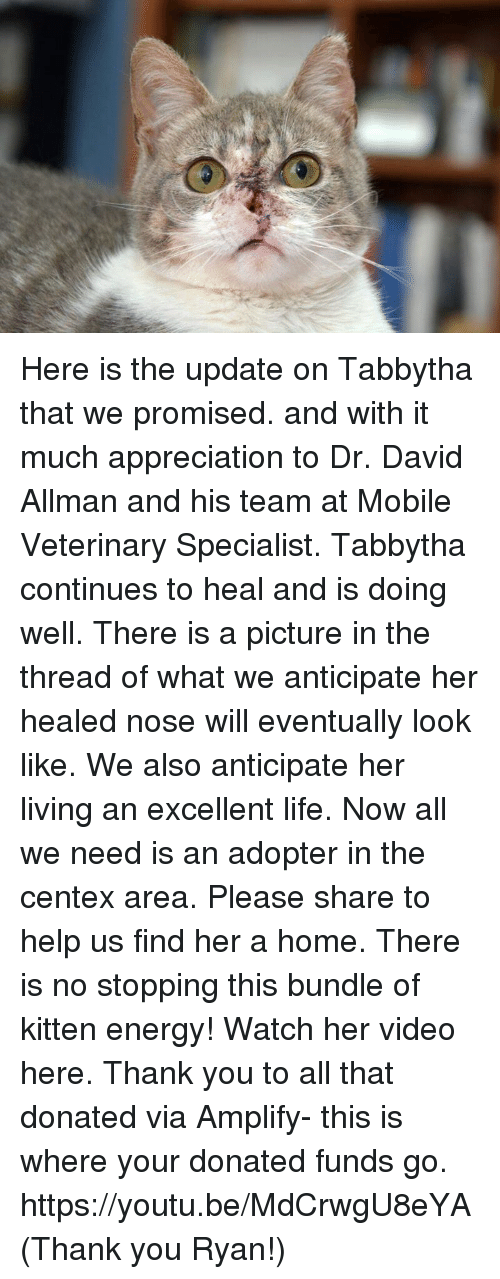 Memes, Youtu, and 🤖: Here is the update on Tabbytha that we promised. and with it much appreciation to Dr. David Allman and his team at  Mobile Veterinary Specialist.  Tabbytha continues to heal and is doing well.  There is a picture in the thread of what we anticipate her healed nose will eventually look like. We also anticipate her living an excellent life. Now all we need is an adopter in the centex area. Please share to help us find her a home.  There is no stopping this bundle of kitten energy! Watch her video here. Thank you to all that donated via Amplify- this is where your donated  funds go. https://youtu.be/MdCrwgU8eYA (Thank you Ryan!)