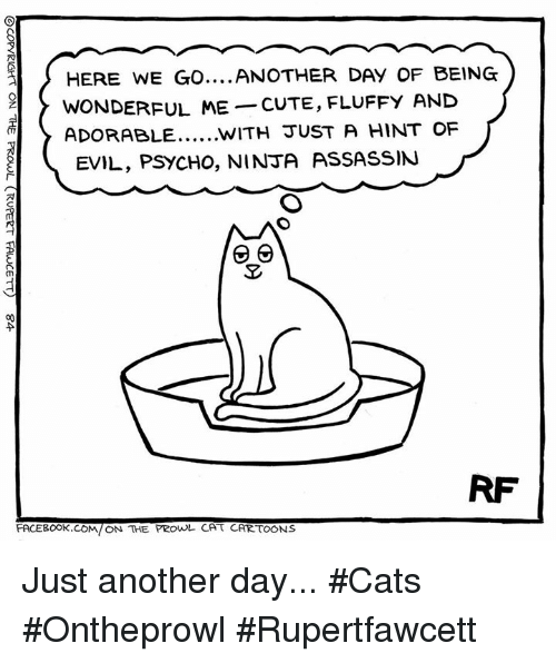 prowl: HERE WE GO  ANOTHER DAY OF BEING  WONDERFUL ME  CUTE, FLUFFY AND  ADORABLE WITH JUST A HINT OF  EVIL, PSYCHO, NINJA AssASSIN  RF  FACEBOOK.COM/ON THE PROWL CA t CARTOONS Just another day... #Cats #Ontheprowl #Rupertfawcett