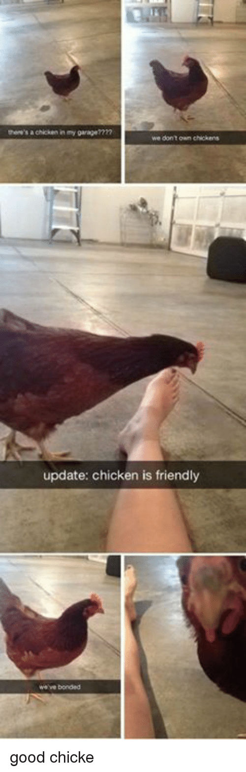 Chicken, Good, and Own: here's a chicken in my garagemn  we dont own chickens  update: chicken is friendly good chicke