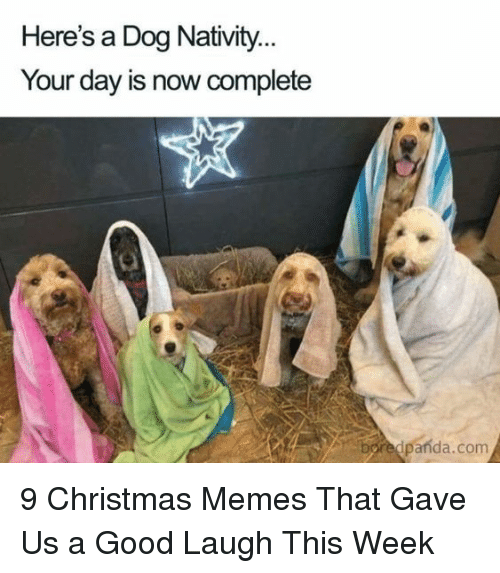 Christmas, Memes, and Good: Here's a Dog Nativity  Your day is now complete  boredpanda.com 9 Christmas Memes That Gave Us a Good Laugh This Week